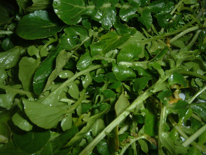 watercress leafy greens